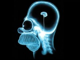 Cerveau Homer
