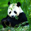 Google Panda : Application 3.4 du filtre de nettoyage