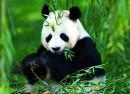 Google Panda 4.1 : Filtrage de la MAJ 27 en cours