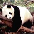 Google Panda 3.9 : 1% des résultats concerné par le filtre