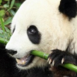 Google Panda : 21ème mise à jour du filtre du moteur