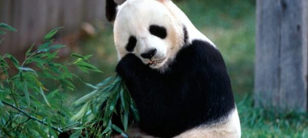 Google Panda : 23ème mise à jour du célèbre filtre