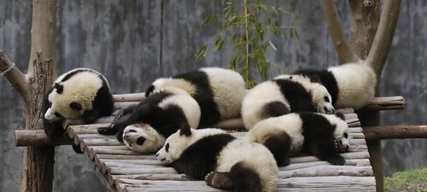 Google Panda : Mise à jour 24 du célèbre filtre