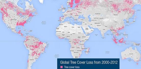 Visualisez la déforestation en temps réel avec le nouvel outil Google