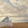 Google : Démonstration d'une livraison par drone