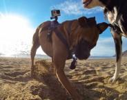 GoPro : Le harnais Fetch conçu pour votre chien