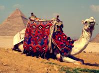 Google Street View : Egypte