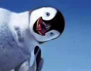 Google Pingouin 3.0 : Le filtre anti-black hat appliqué