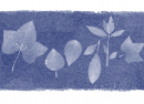 Google : La botaniste Anna Atkins & le cyanotype en doodle
