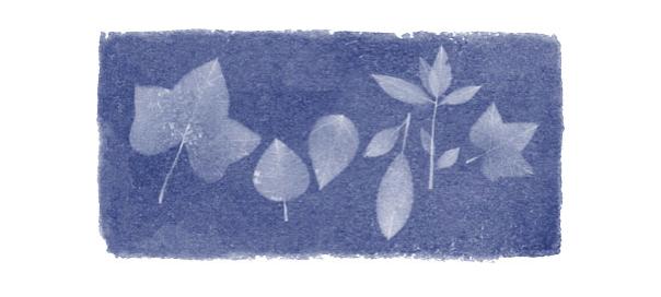 Google : Doodle Anna Atkins