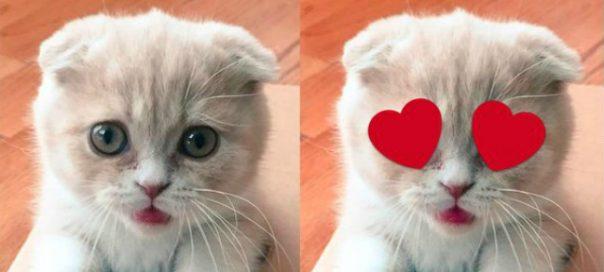 Twitter : Bientôt les autocollants (stickers) sur vos photos