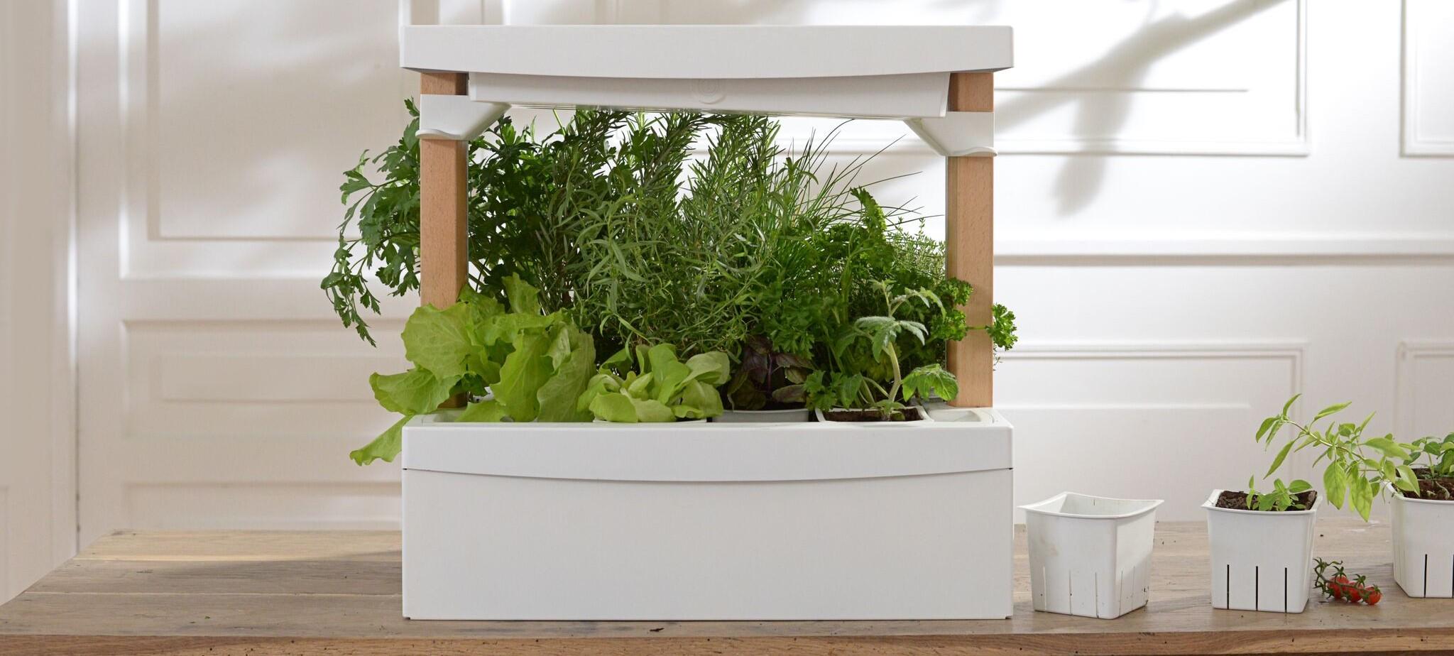 fresh square le potager d 39 int rieur autonome weblife. Black Bedroom Furniture Sets. Home Design Ideas