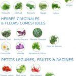 Fresh Square - Plants
